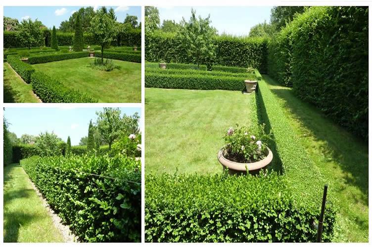 Beautiful haie de jardin contemporain ideas design for Entretien jardin angouleme